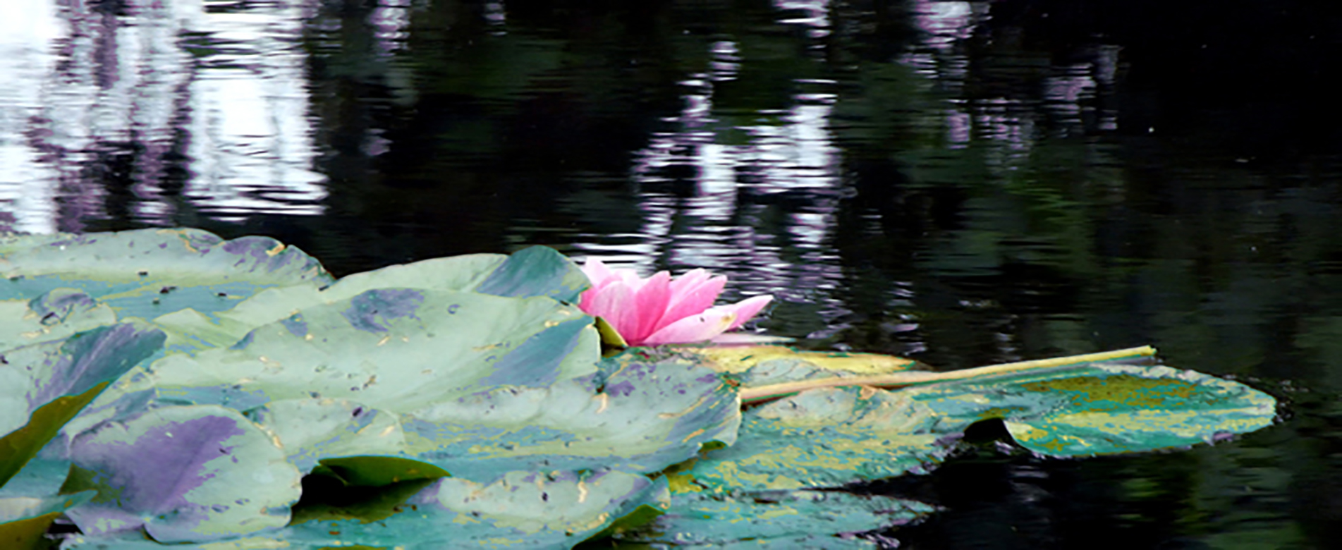 Monet_Impressions_2015